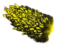 Whiting American Hen Saddle Black Laced - Yellow