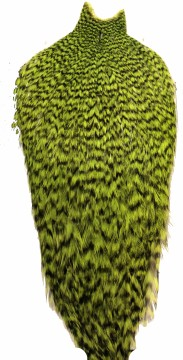 Whiting American Rooster Cape grizzly fl green chartreuse