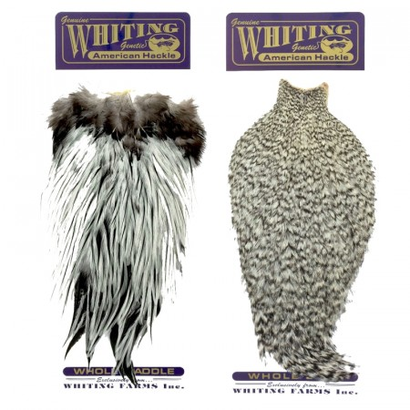 Whiting American Rooster